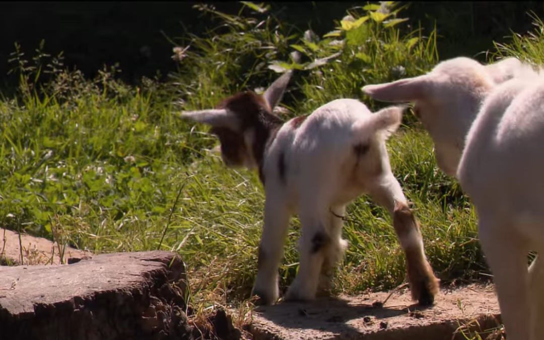 Swisslos: Wildpark Mühletäli Olten (SO) – YouTube